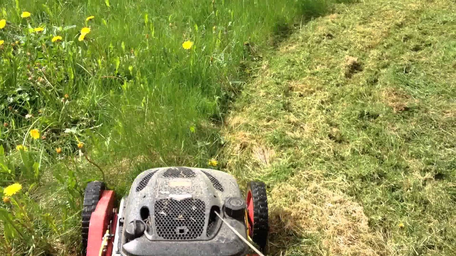 Guide to cutting long grass