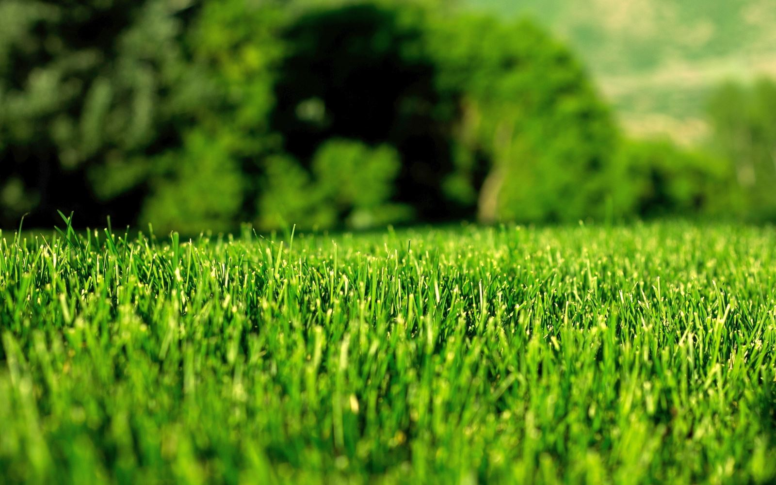 Look after your lawn in the summer